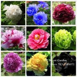 colors of peonies 9 colors mixed potted flower seeds 180 pecies peony seeds