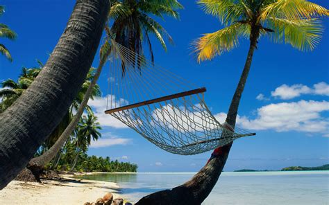 Tropical Hammock wallpaper tropics palm hammock hammock in a tropical paradise