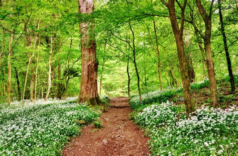 woodland forest plants and trees scientists warn of unprecedented damage to forests across