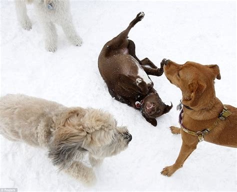 play with puppies nyc winter nemo deadly blizzard dumps of snow across east coast trapping