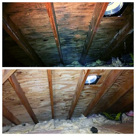 Black Mold In Attic - attic mold inspection and removal lombard il manhattan il