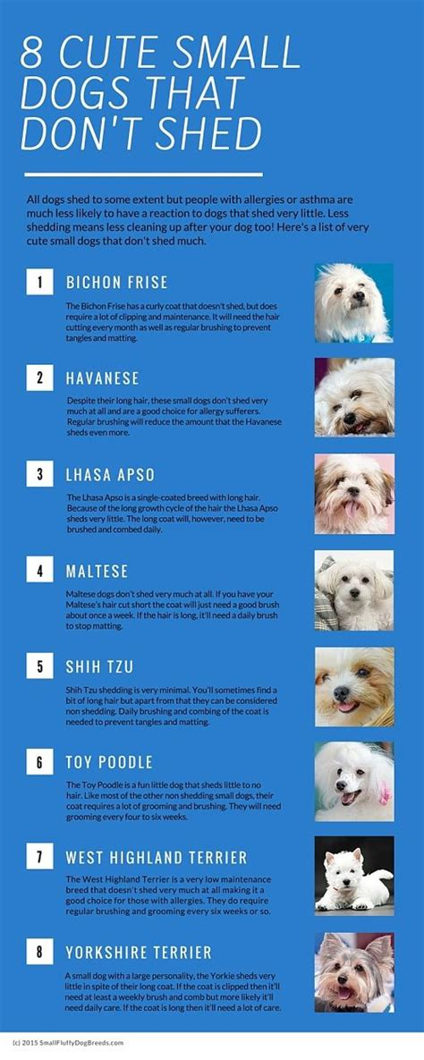 List Of Small Breeds That Don T Shed cutest small dogs small dogs and sheds on