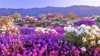 desert flowers the view from fez photo of the day rain turns sahara green