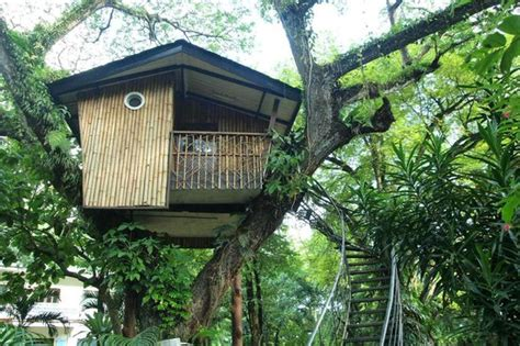 santa cruz tree house pasonanca park tree house foto di great santa cruz island zamboanga city tripadvisor