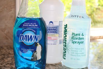 dish soap for garden pest 17 best images about bugs pests etc no more on