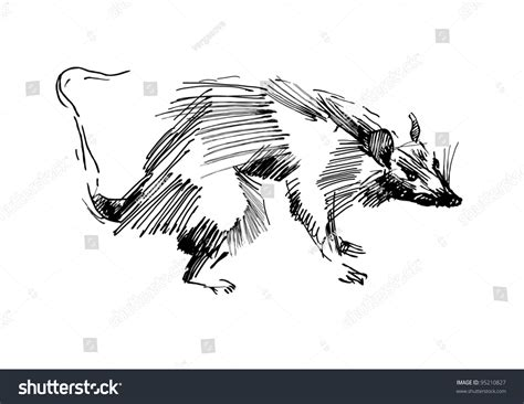 Rat Hand Drawing Black And White Sketch Stock Vector 95210827 Shutterstock Vector Image Black White Sketch