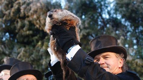 groundhog day news it s groundhog day punxsutawney phil predicts six more