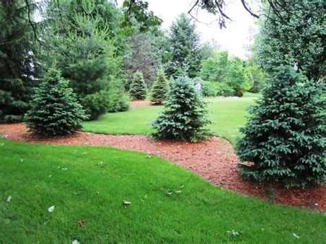 Trees For Backyard Landscaping by The Start Of A Tree Screen Outdoor Spaces