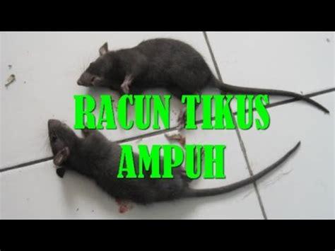 Jual Racun Tikus Mao Wang Bandung jual racun tikus mao wang www cemfor