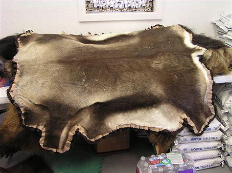 caribou rug caribou rug alaska precision taxidermy