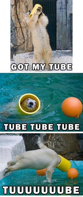 Tube Meme - got my tube polar bear weknowmemes