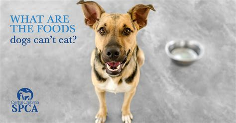 list of foods dogs can t eat what are the foods dogs can t eat