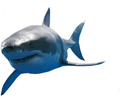 grand requin blanc psd, image vectorielle vectorhq.com