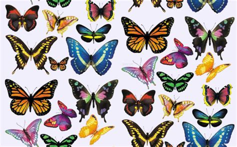 butterfly themes pvt ltd butterfly backgrounds tumblr images reverse search