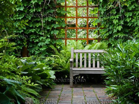 Pflanzen Für Den Schattigen Garten by Pflanzen F 252 R Schattigen Garten Garten Gebirgs Pflanzen F
