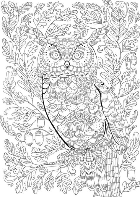 blank coloring pages for adults 1023 best coloring blank pages images on