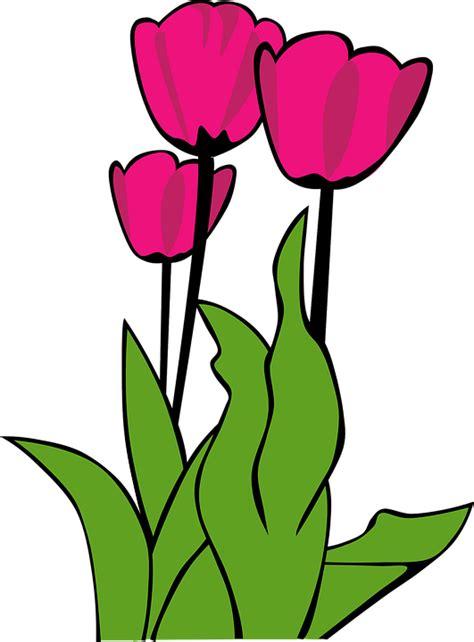 cara membuat gambar semi transparan gambar vektor gratis tulip warna merah muda gambar