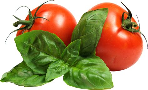 vegetables png vegetable png www pixshark images galleries with a