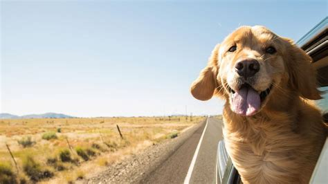 puppy bowl 2017 date and time how to take your on a road trip