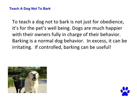 teach puppy not to bark teach a not to bark how to your s barking