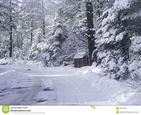 imagenes del invierno graciosas estaci 243 n del invierno en bosque con nieve imagen de