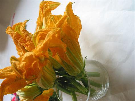 dei fiori fiction poesia fiore di zucca di sophrosouneh su efp fanfiction