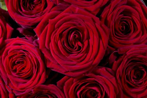 Valentines Day Roses That Speak To You by Where S Day Flowers Are Grown And How To Find