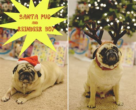 why do pugs eat their own the adventures of santa pug and reindeer boy modernly
