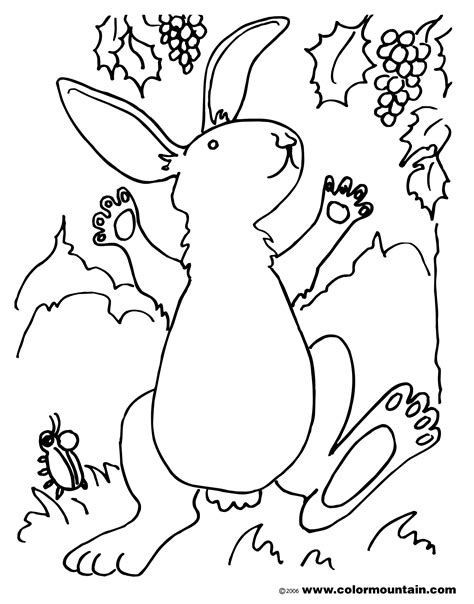 little bunny coloring pages free coloring pages