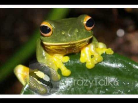 imagenes de animales bertebrados animales vertebrados e invertebrados youtube