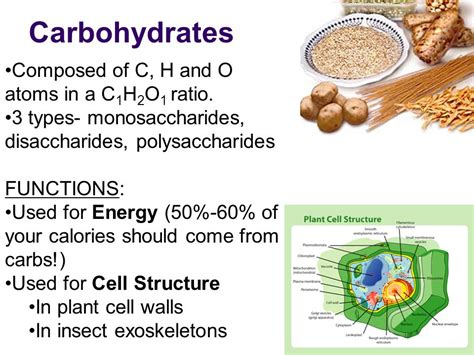 carbohydrates function in cell macromolecules what cells are made of ppt