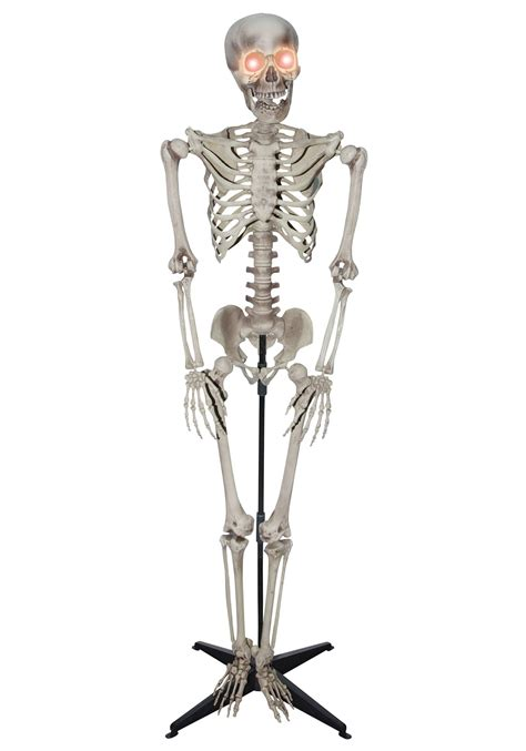 a skeleton 5 foot skeleton