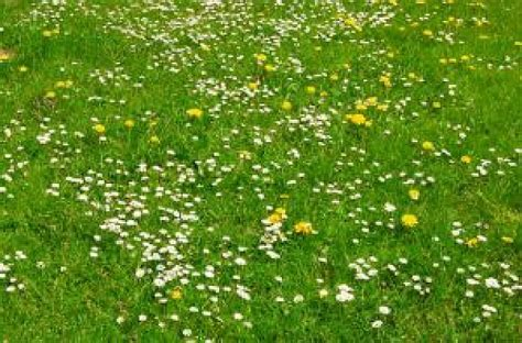 imagenes prados verdes um prado verde baixar fotos gratuitas