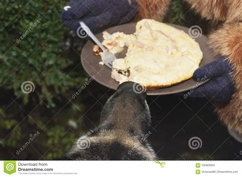 dog only eats from hand dog sniffing food stock photo image of sniffing nobody