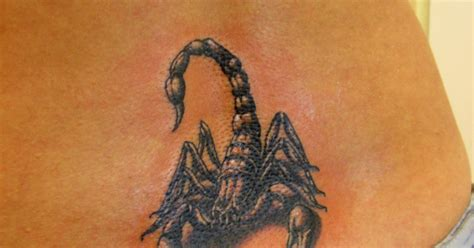 dragon directory scorpion tattoo design
