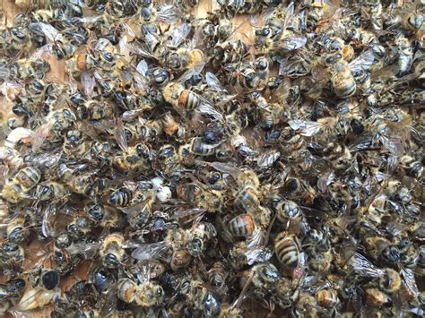 Sprei Honey Bee millions of bees die after south carolina and florida