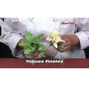 Orquidias En Pasta Gome Tecnicas Avanzadas  YouTube