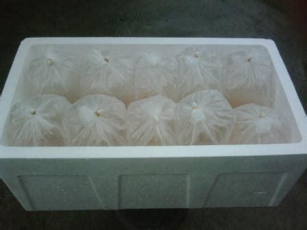 Bibit Gurame telor bibit gurame murah budidaya ikan air tawar