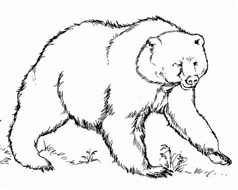 American Black Bear Coloring Page Coloring Home