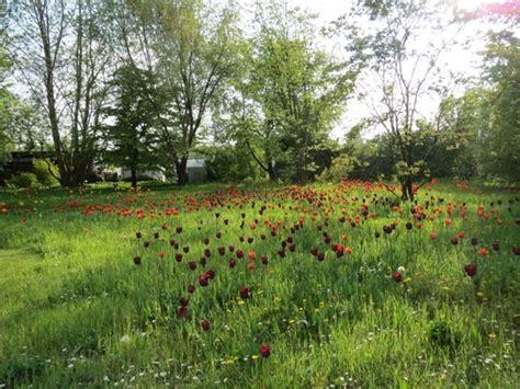 Britzer Garten Rotkopfweg by 美しいチューリップを見るならブリッツァー ガルテン ベルリン遊歩