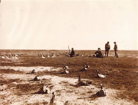 vintage duck hunting boats 104 best images about vintage waterfowl on pinterest old