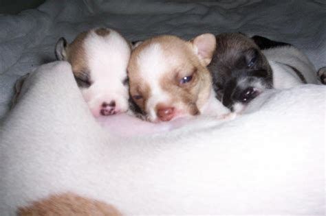 how do puppies need to stay with their how do puppies need to stay with their before going to another home blurtit