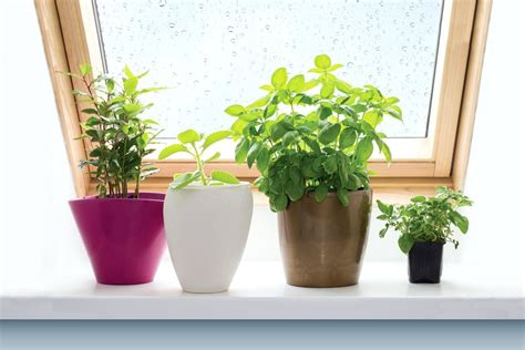 Plants For Windowsill by Windowsill Garden Windowsill Herb Garden Indoor Windowsill