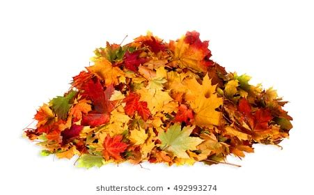 fall leaf pile png  fall leaf pilepng transparent