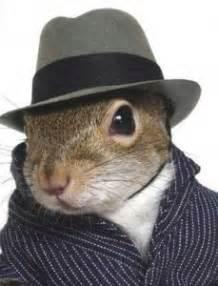 Ahmielyn stina8753 squirrel in a hat yes it s secret