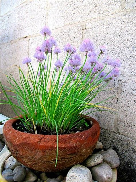 Chive Planters by 17 Best Images About Diy Terrace Makeover On