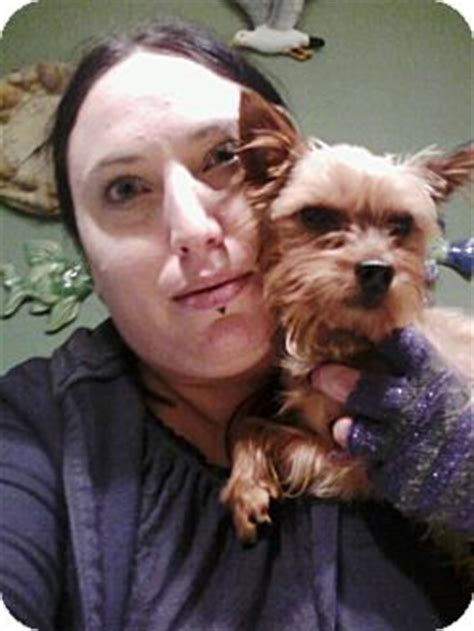 staten island puppy adoption mello adopted staten island ny yorkie terrier
