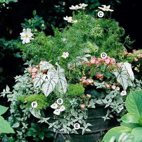 shade container garden container garden recipes for shade