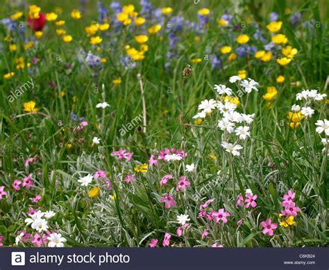 flowers uk flowers uk stock photo royalty free image 38534444