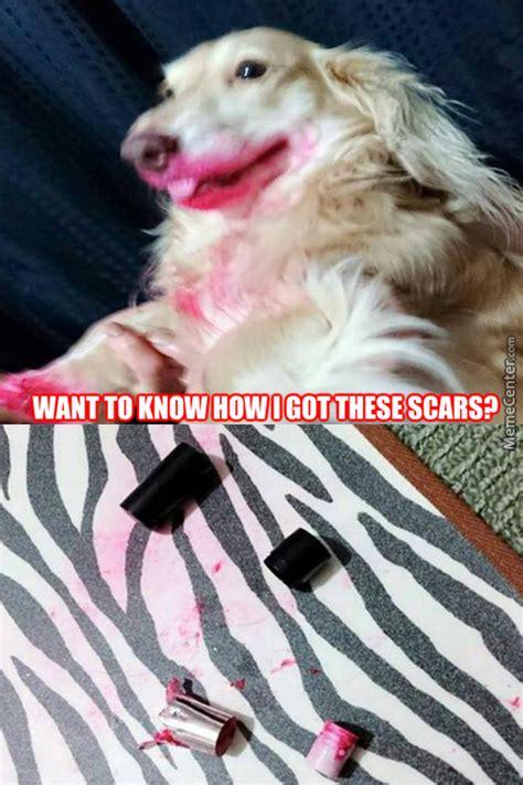 Rich Dog Meme